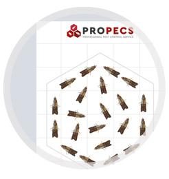 Липка продукція пастки для мух