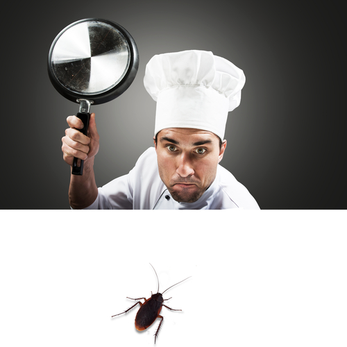restaurant-pest-extermination