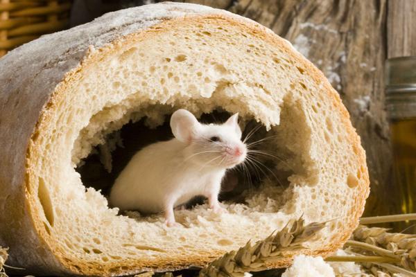 миша 2