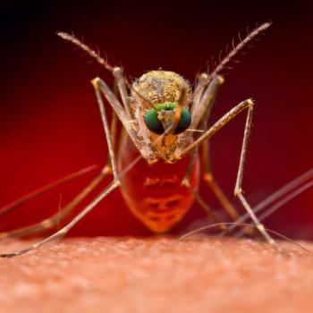 обробка від комарів в україні, знищення комарів