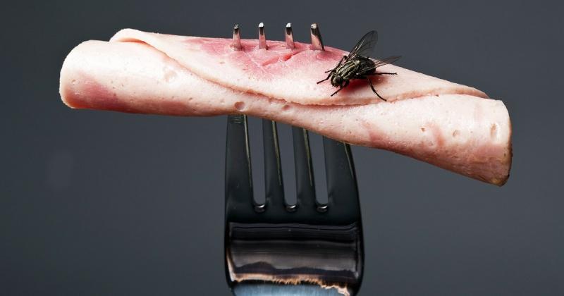 боротьба з мухами на харчових підприємствах