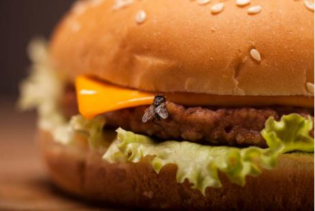 Безпека харчових продуктів: дезінфекція та санітарія
