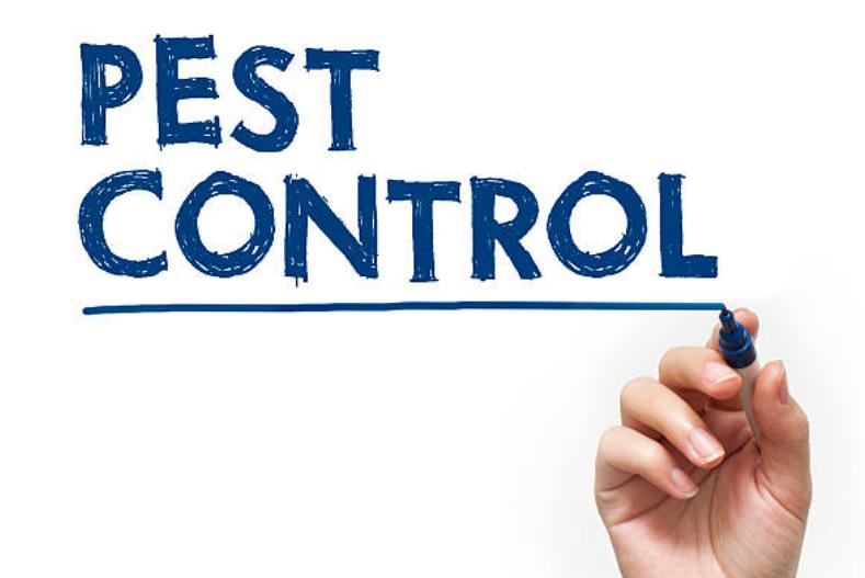 ТОП 6 питань до постачальника послуг з контролю шкідників боротьбі зі шкідниками