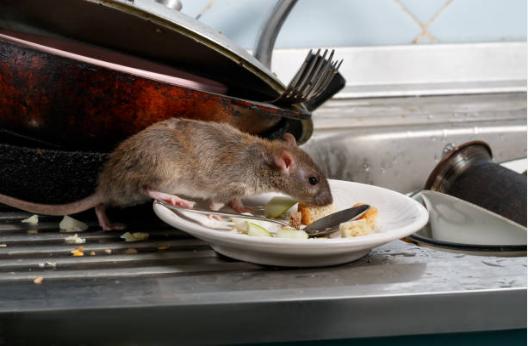 Боротьба зі шкідниками в ресторанах і кафе (HoReCa)