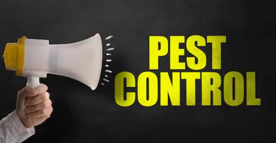 7 кроків до ефективної програми боротьби зі шкідниками