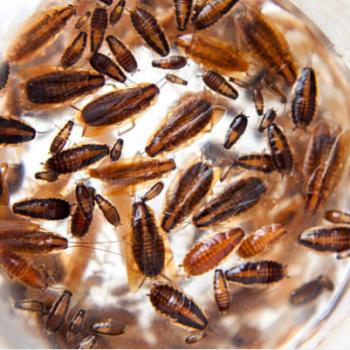 Дезінсекція від професіоналів. Боротьба з комахами