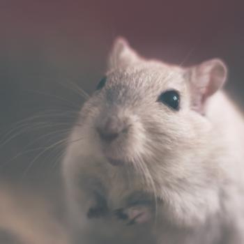 Дератизація. Знищення щурів і мишей на об'єктах