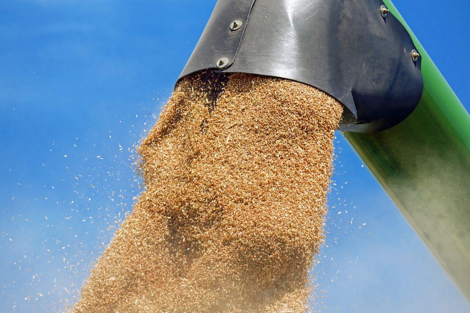 зараження хкідниками хлібних запасів, як виявити зараження складів шкідниками