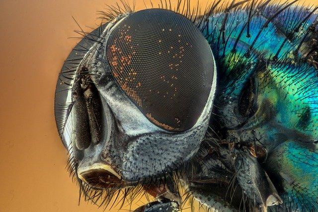Факти про мух, цікава інформація про мух