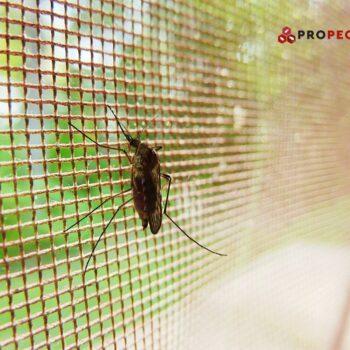 Боротьба з комарами: народні vs. сучасні методи